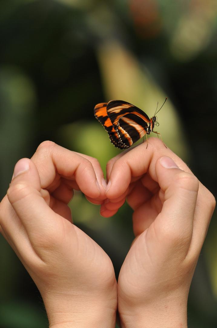 Herz und Schmetterling