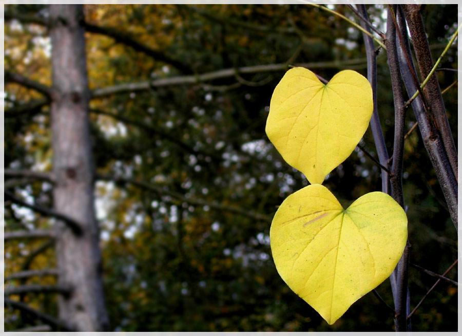Herzen der Natur