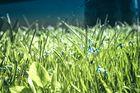 Herzlich Willkommen Frühling 2013