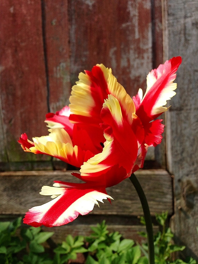 Herzlich Willkommen Frühling