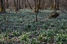 DE: Herzliche Frühlingsgrüße an alle meine Freunde! by Kosche Günther