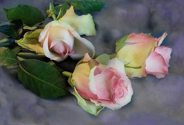 Herzliche   Rosen für Dich