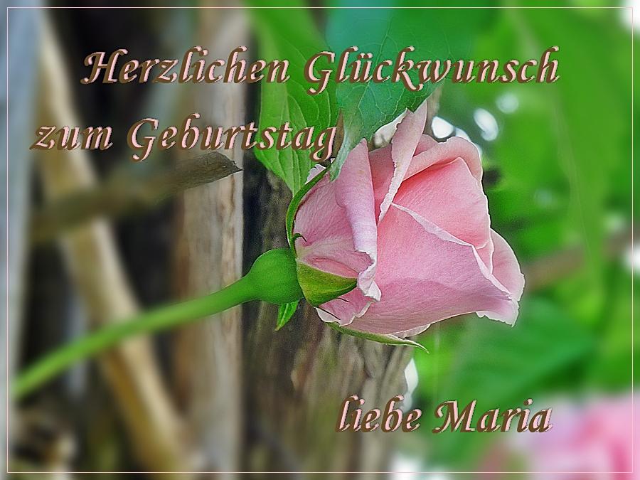 Maria Geburtstag