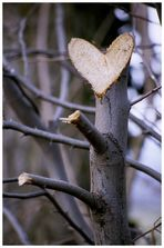 Herzschnitt