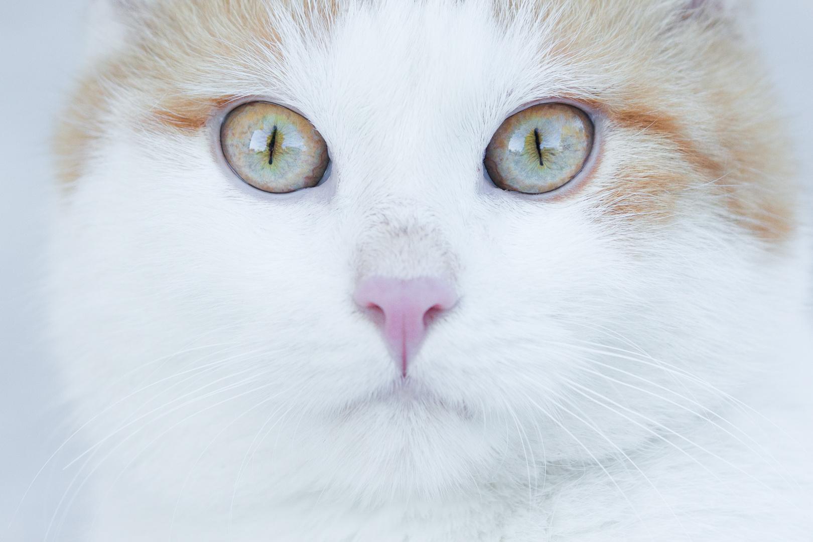 He´s got beautiful eyes