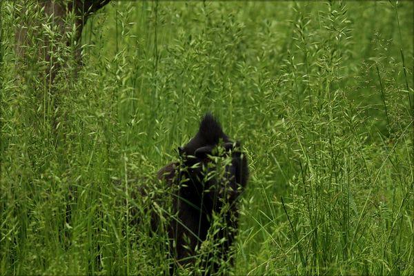 hessische Graslandschaft und seine Punks...