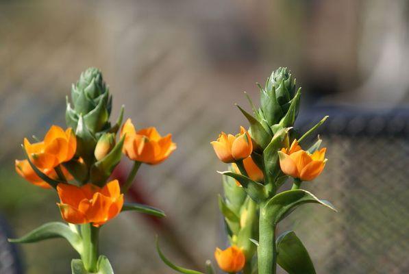 het eerste bloemetje in lente 2007