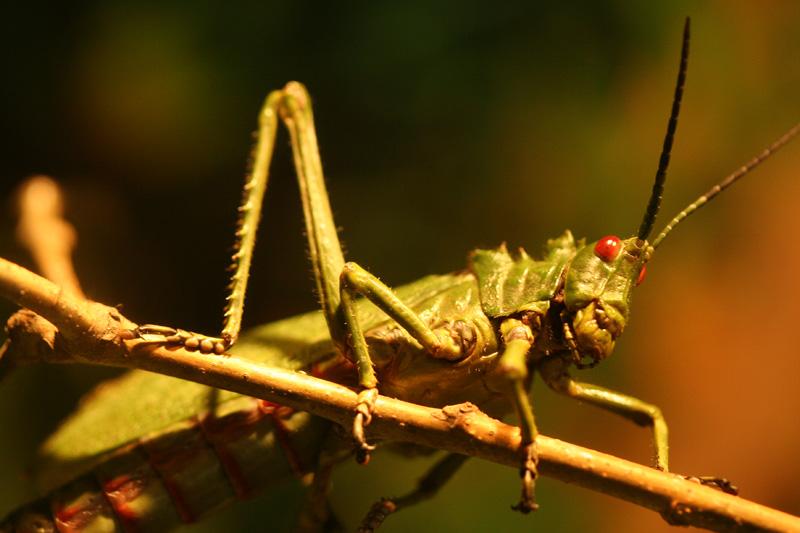 Heuschreckenplage einmal anders
