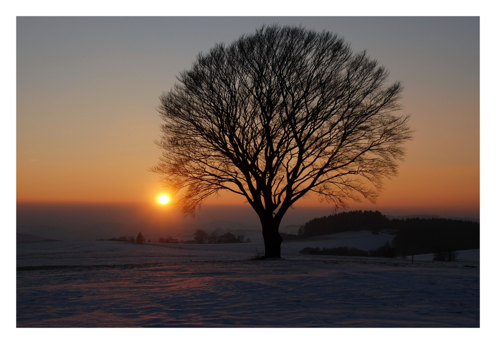 """heut Abend bei meinem """"Kugelbaum"""""""