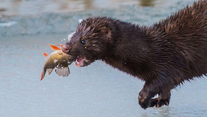 Heut gibt's frischen Fisch...