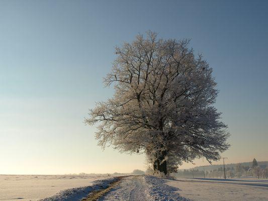 heut ist Baumtag