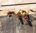 Heute am Bienenstand