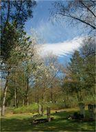 Heute am Waldfriedhof (1)