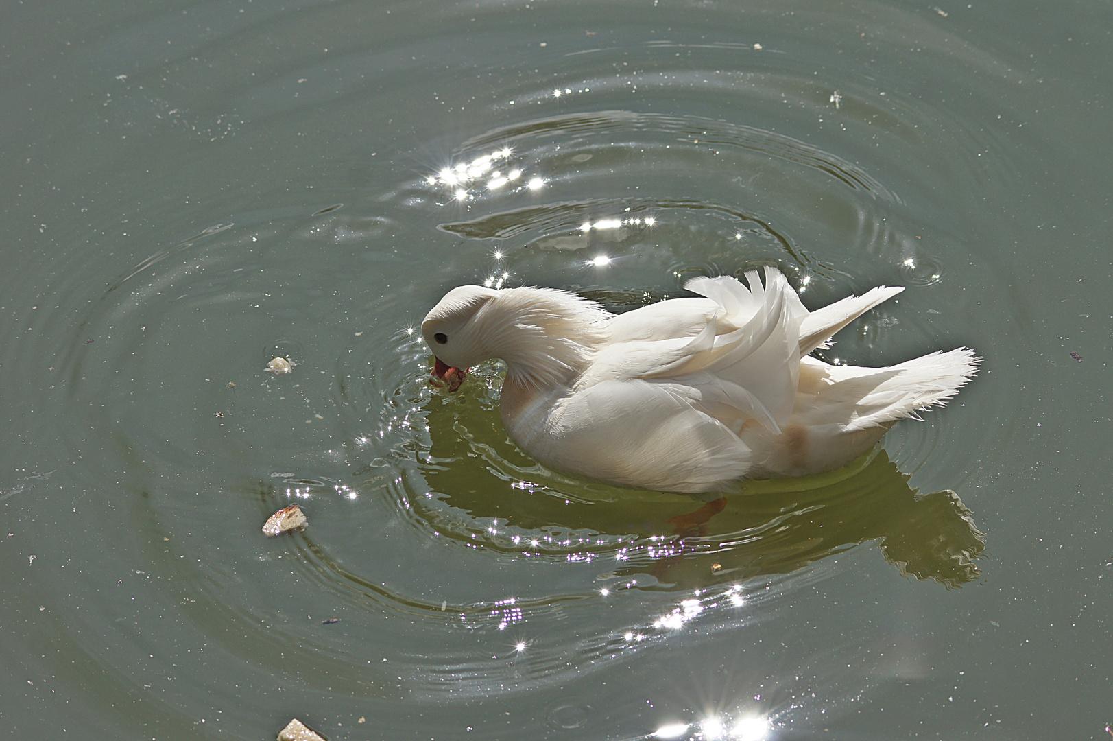 Heute am Wasserschloß Monrepos 2