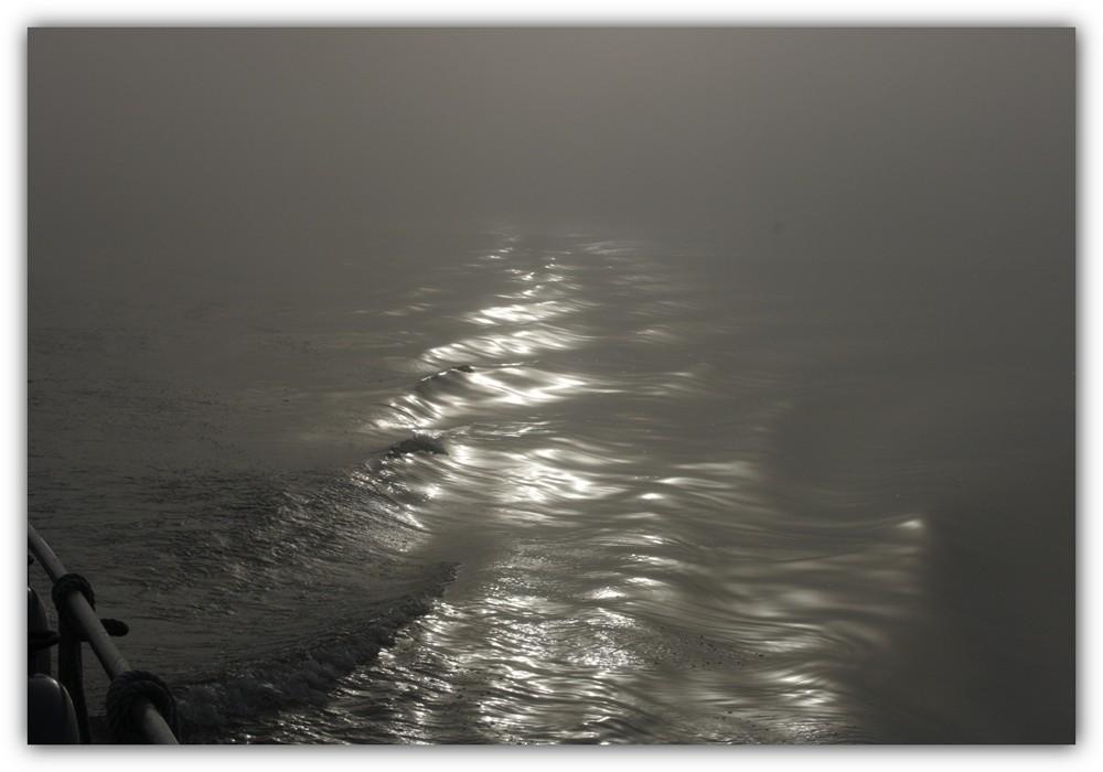 Heute bei Nebel auf der Unterelbe.