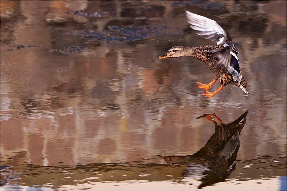 heute beim Enten füttern