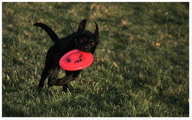 ...heute beim Frisbee-Spielen