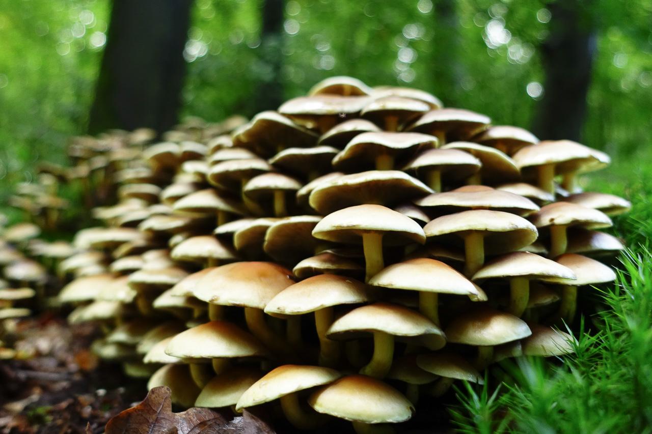 Heute beim Pilzesuchen
