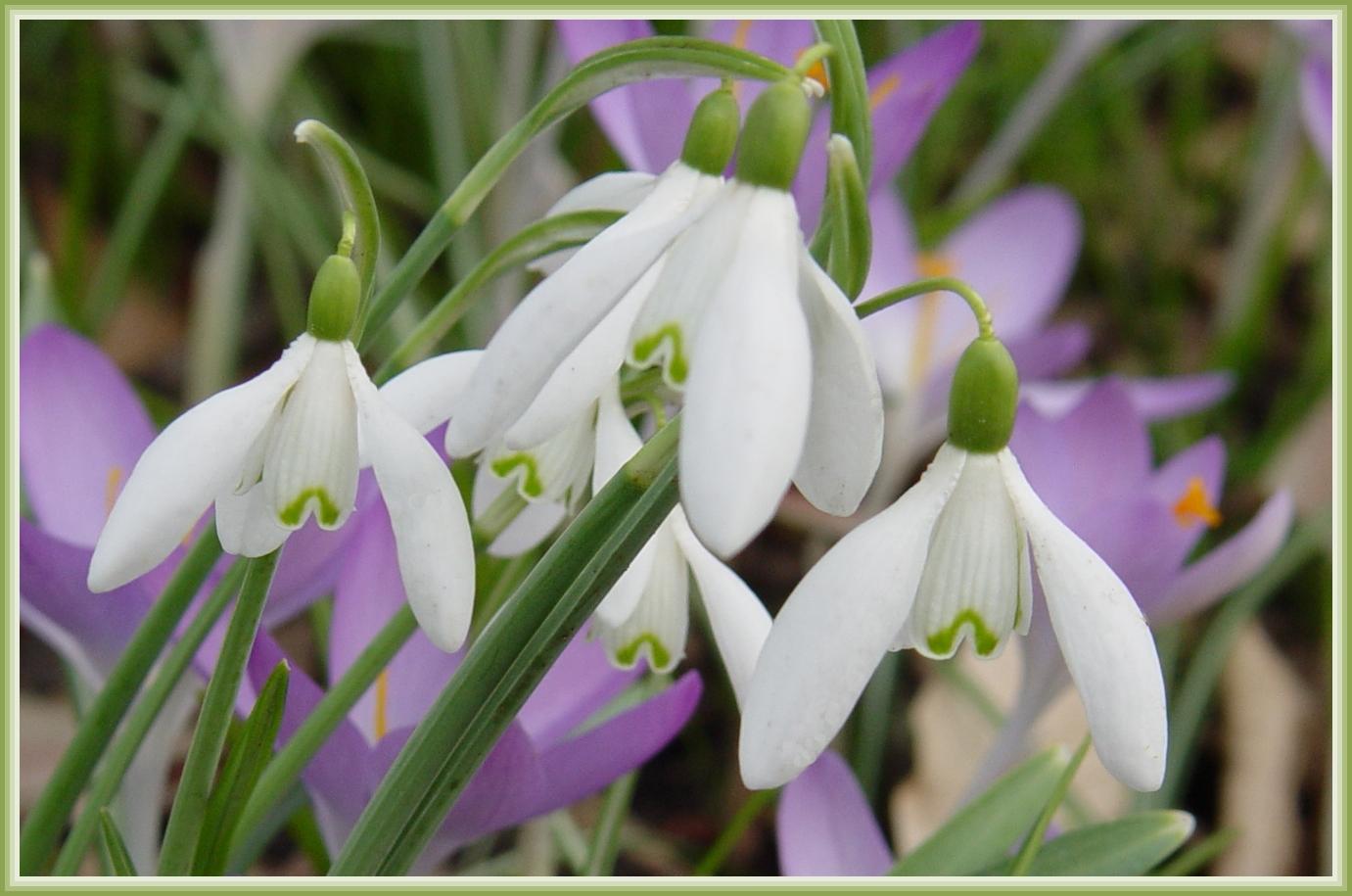 Heute den Frühling besucht 2