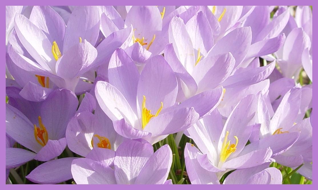 Heute den Frühling besucht 3