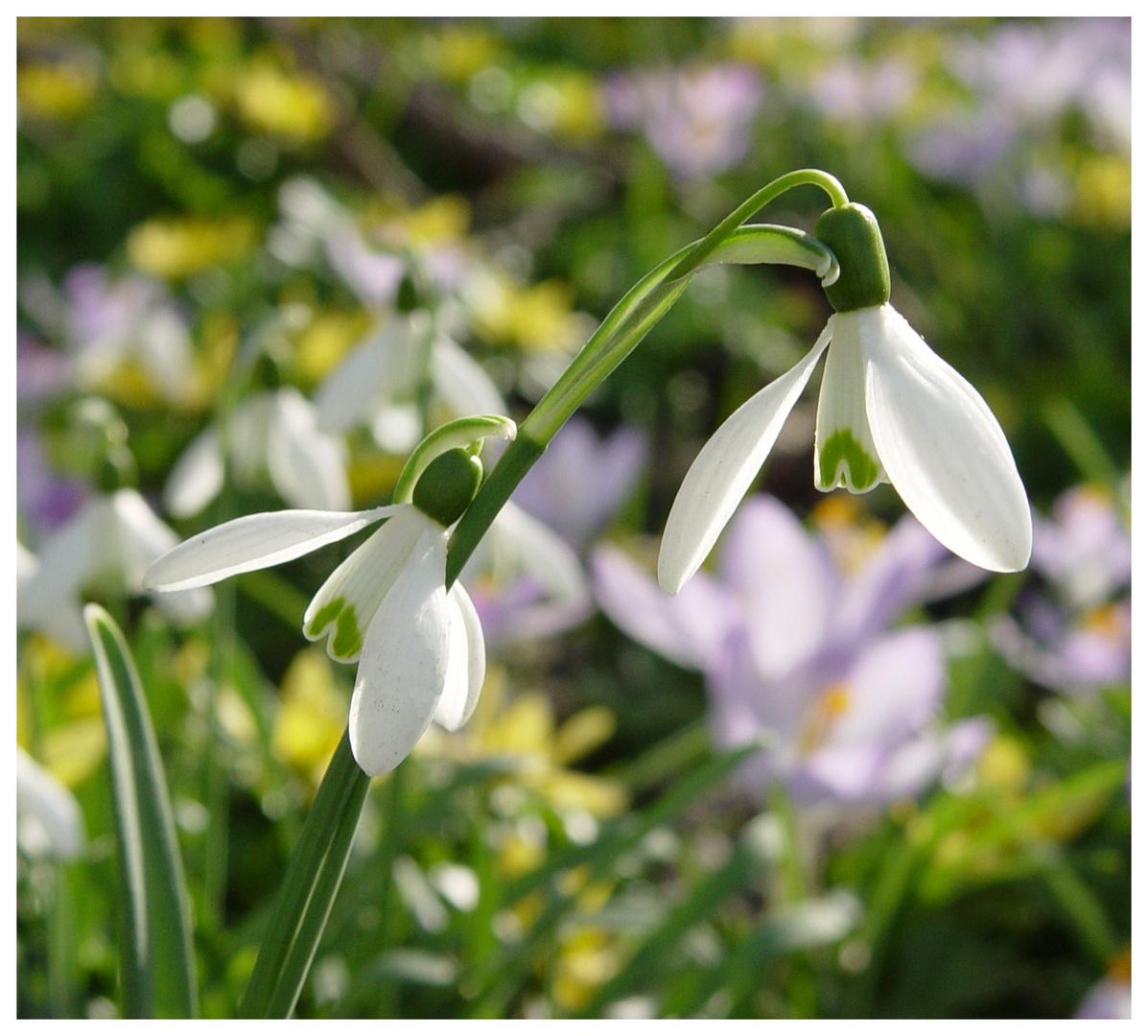 Heute den Frühling besucht 4
