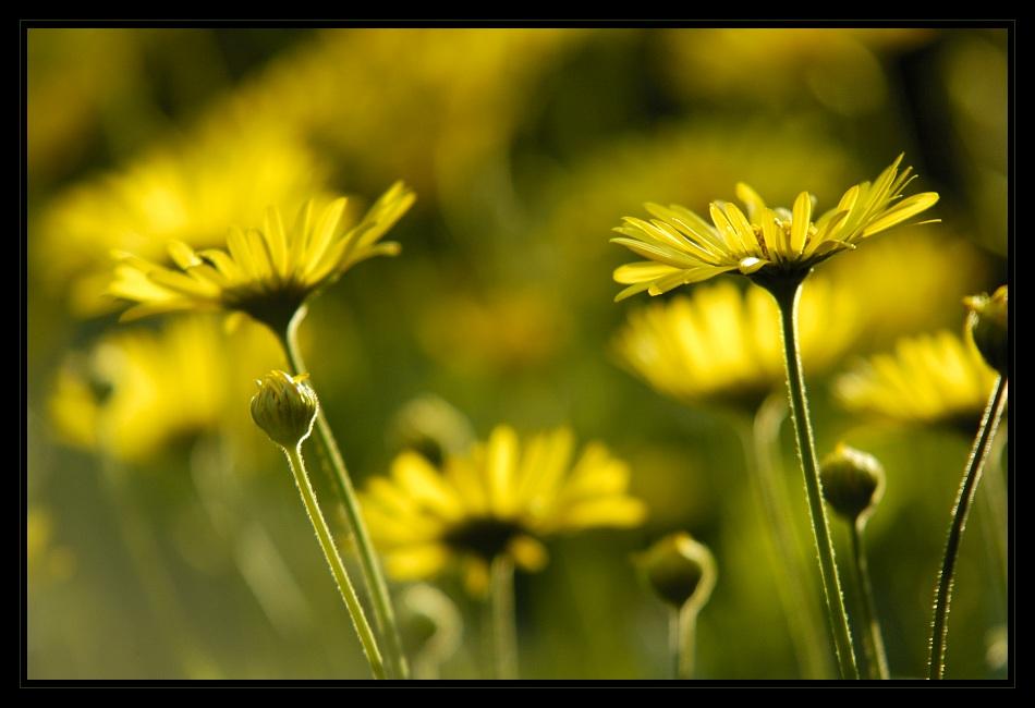 Heute fängt der Frühling an...:-)