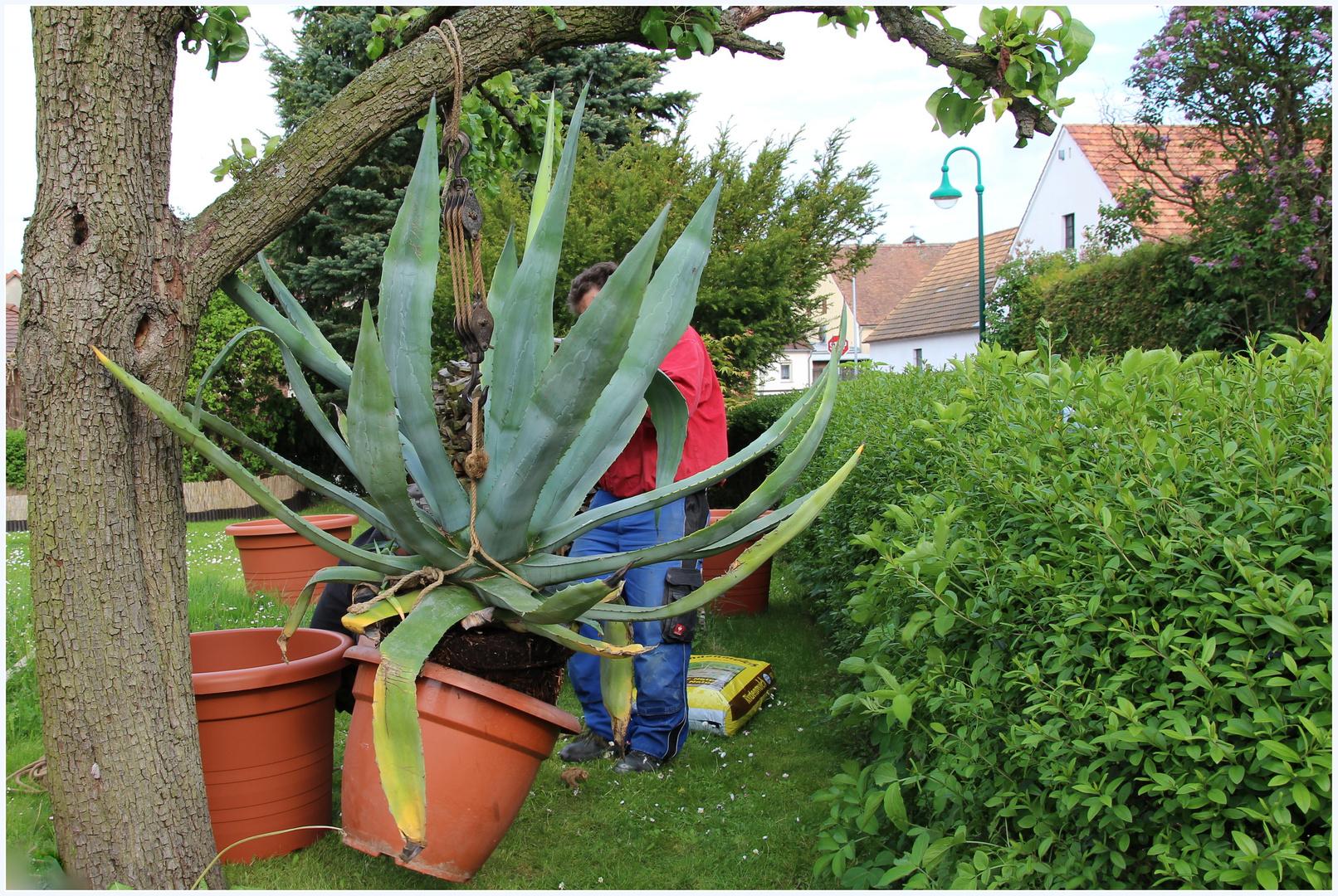 Heute: Gartenarbeit mit schwerer Technik