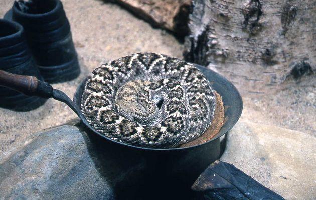 ... heute gibt's bestimmt wieder irgendsoeinen Schlangenfraß