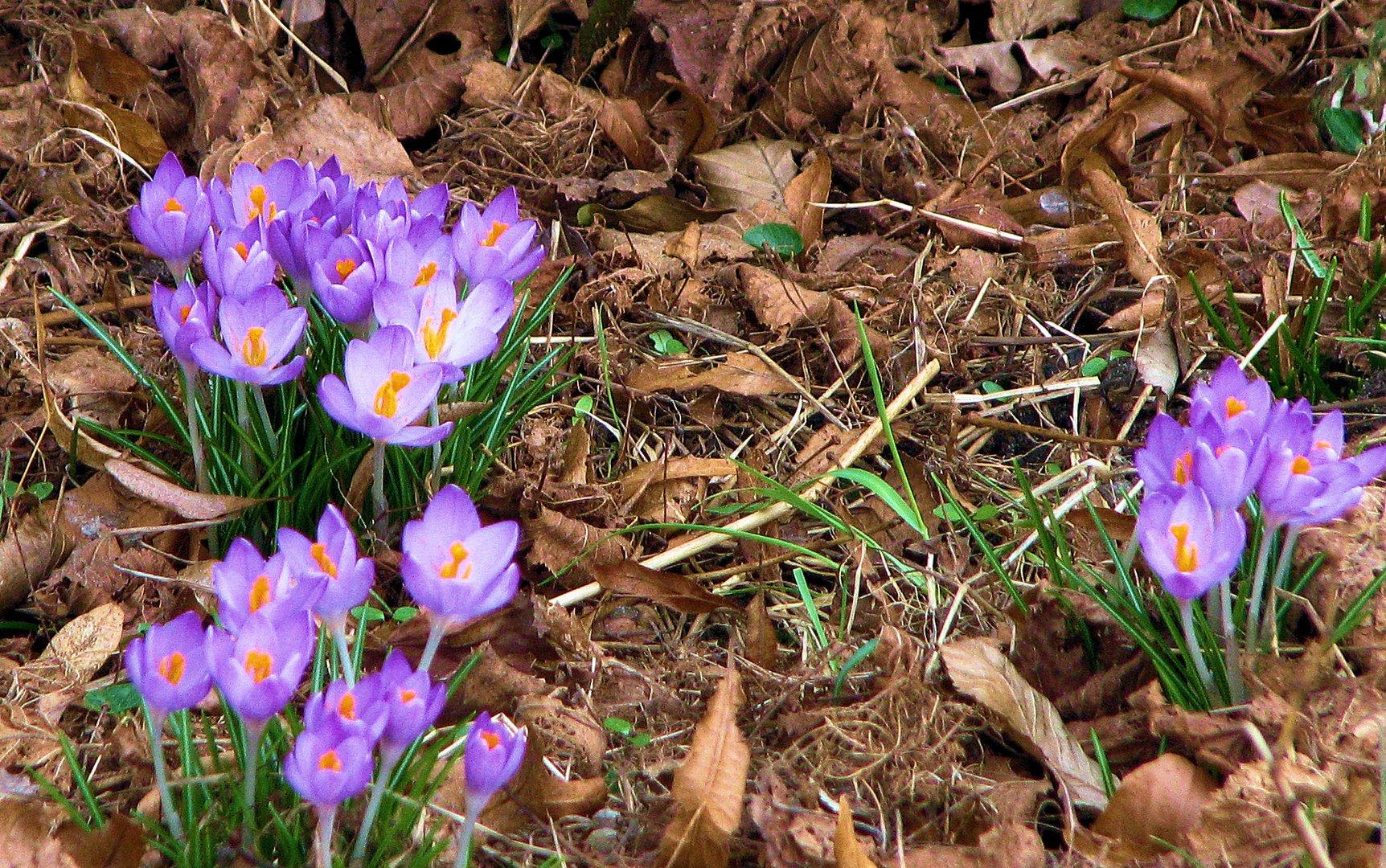 heute habe ich den Frühling gesehen