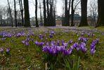 Heute hat der Frühling....