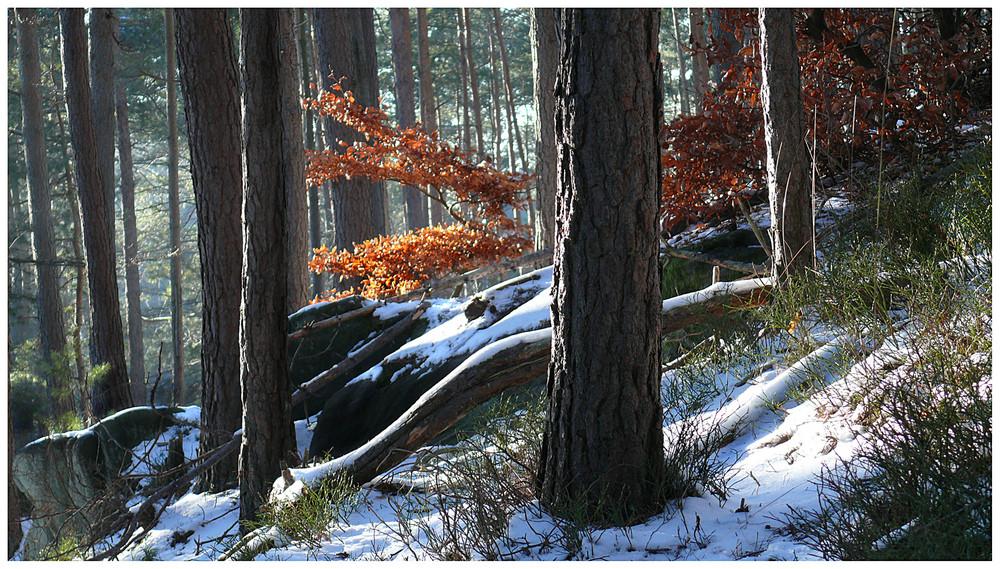 Heute im Pfälzer Wald...