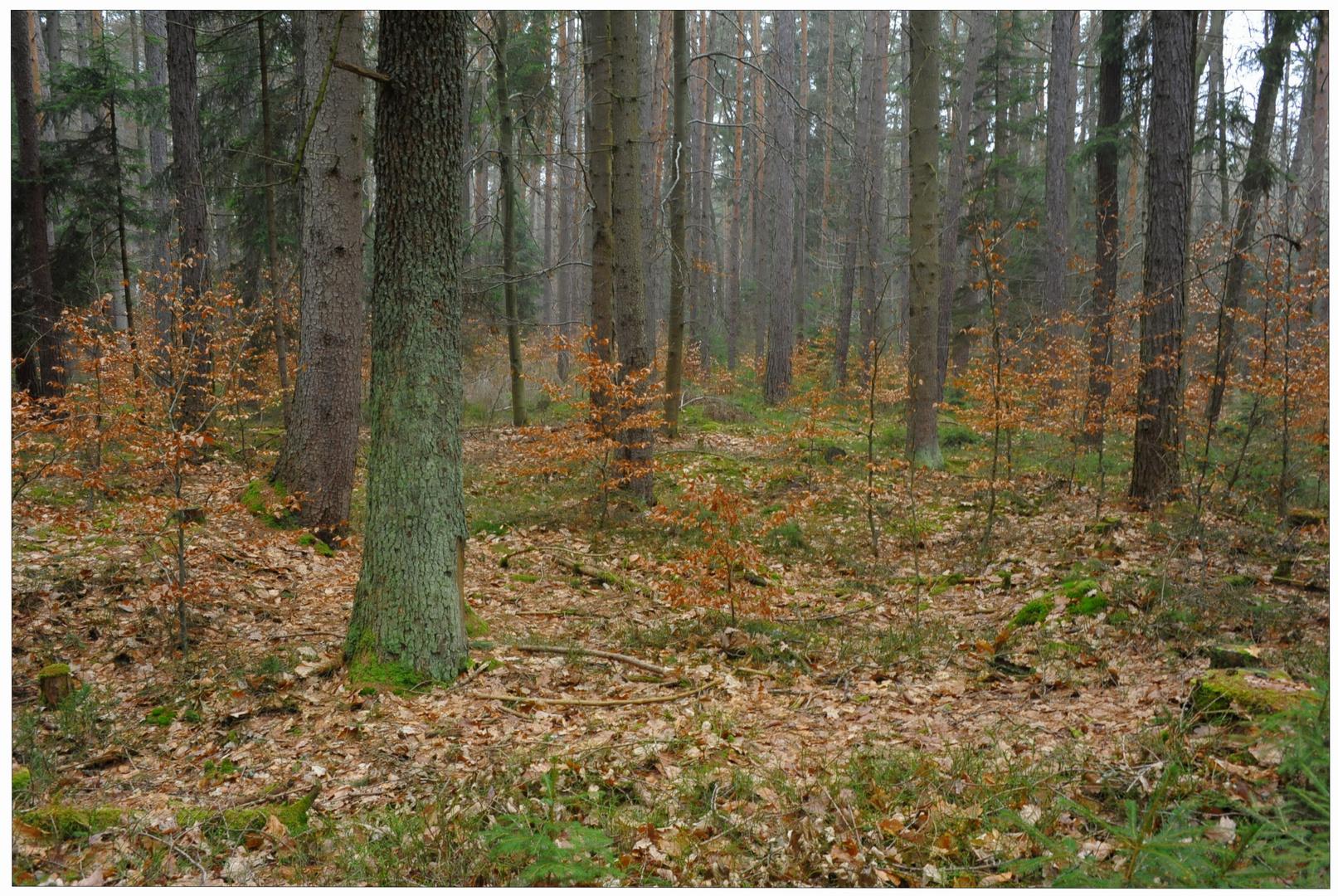 Heute im Wald II (Hoy en el bosque II)
