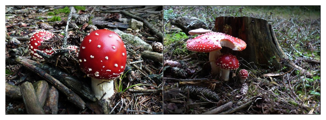 heute in den Pilzen