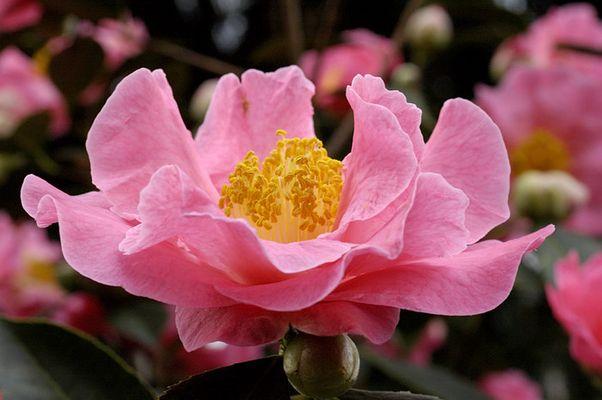 ....heute in der Flora.........