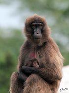 Heute ist Affentag 002