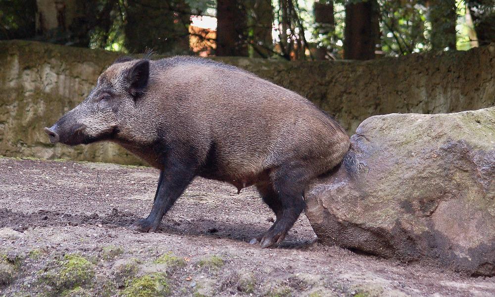 Heute ist der internationale Tag des Glücks,da haben wie aber Schwein gehabt