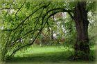 Heute ist der Tag des Baumes ... -2.-