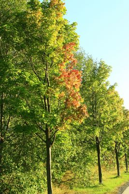 Heute ist Herbstanfang...