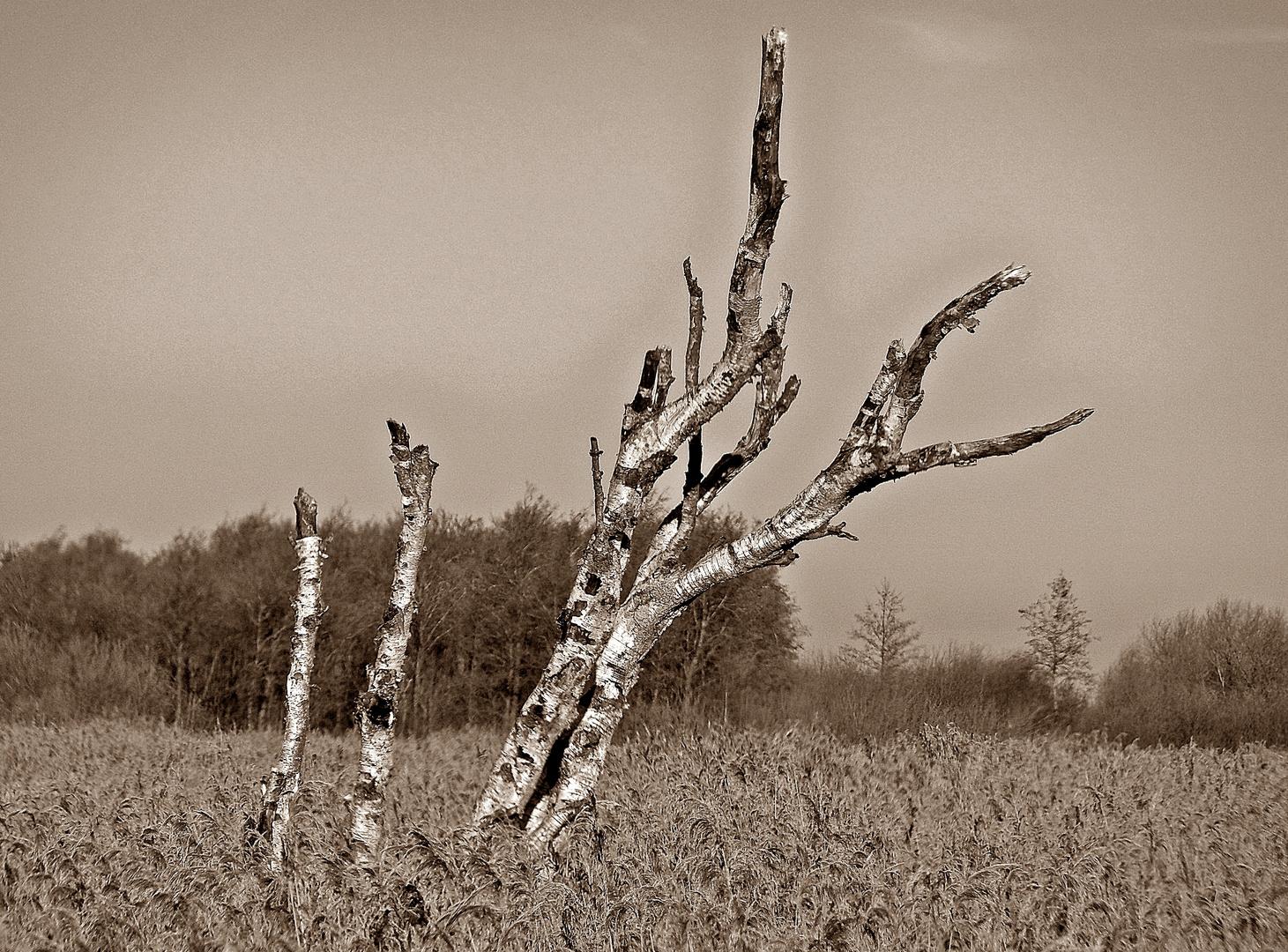heute Mittag im Schlichtinger Moor