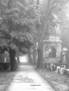 Heute Morgen am Zentralfriedhof