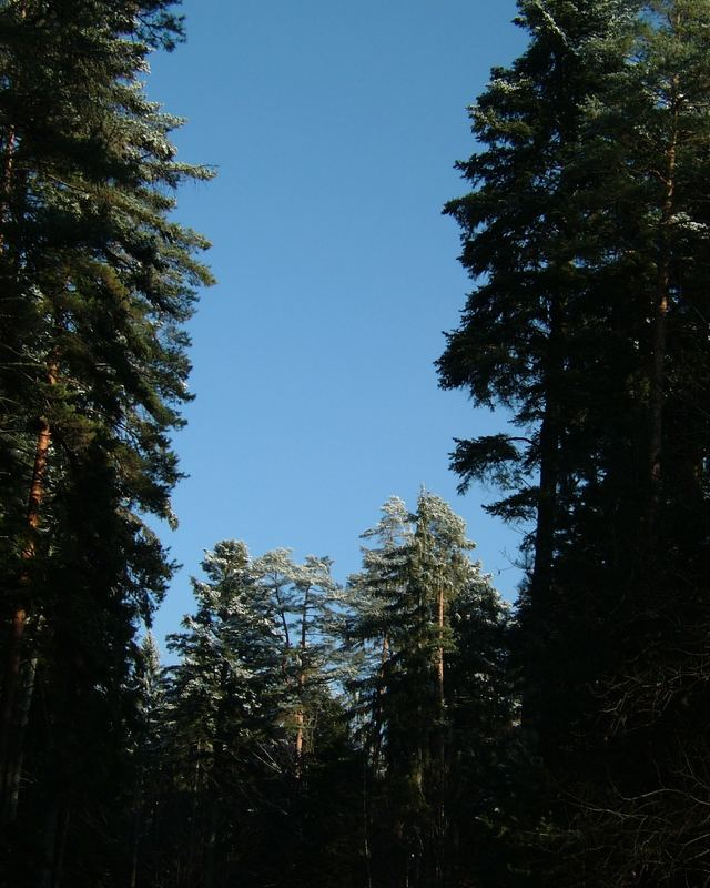 Heute morgen im Schwarzwald 2