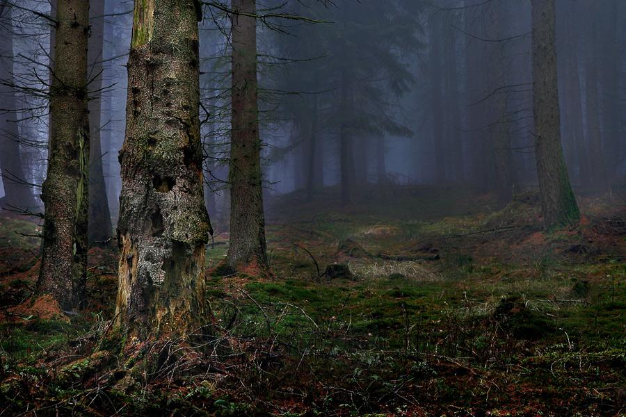 Heute morgen im Wald