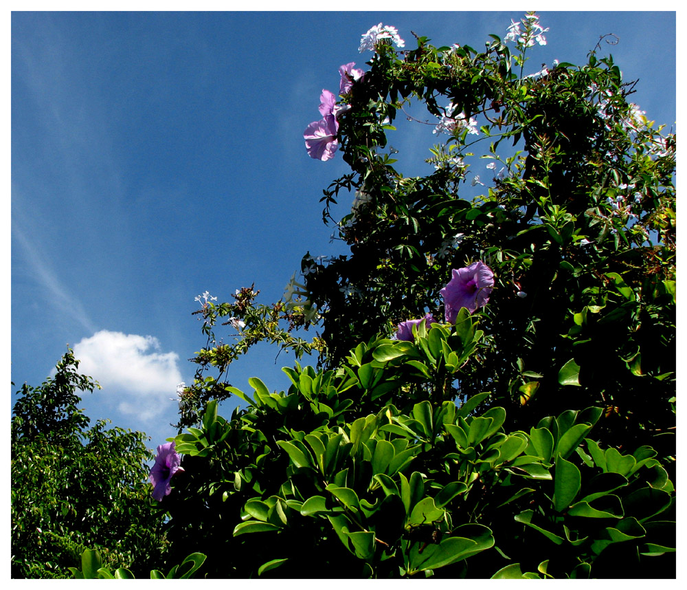 Heute Morgen in meinem Garten
