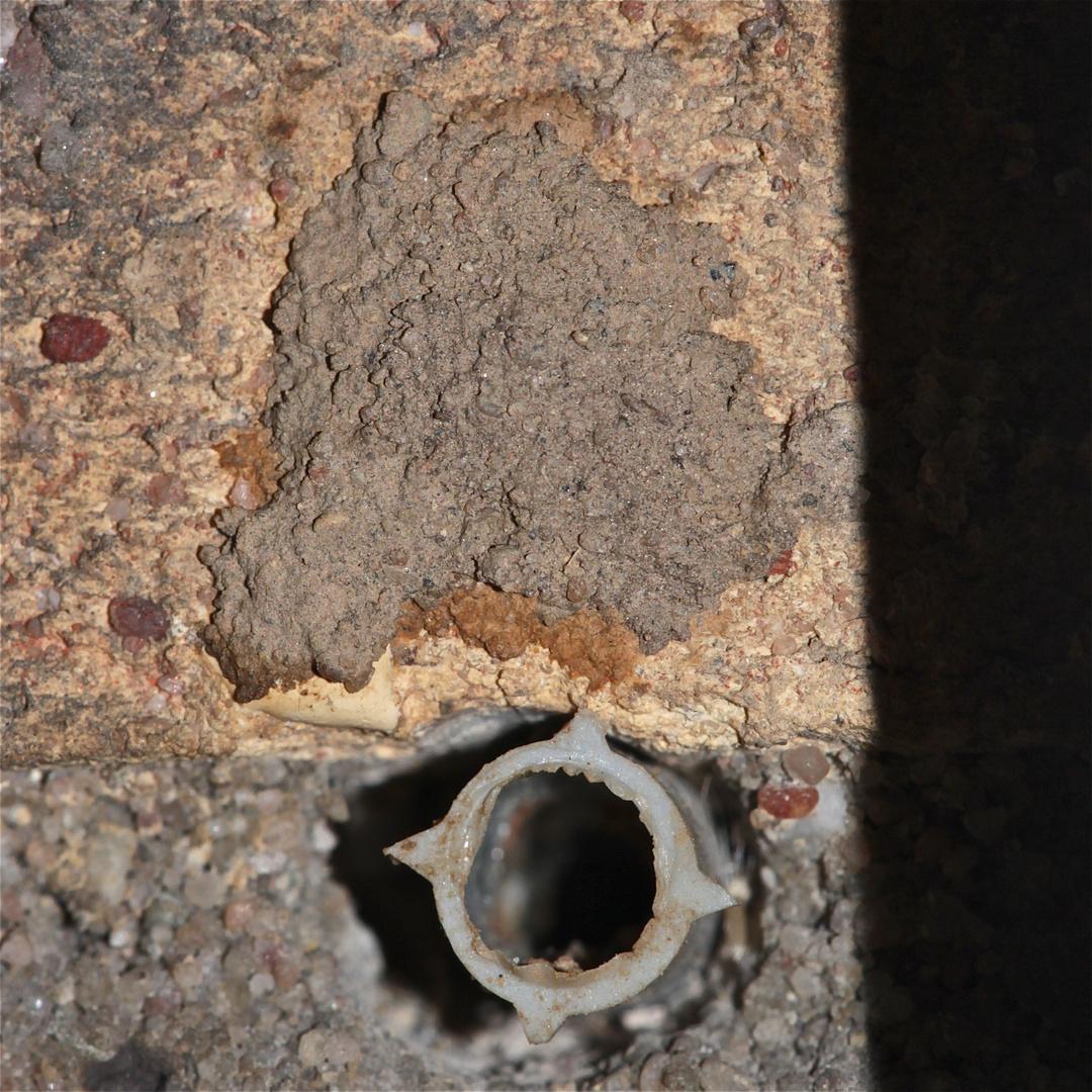 Heute morgen war das Nest über dem Dübel schon verschlossen - Osmia cornuta