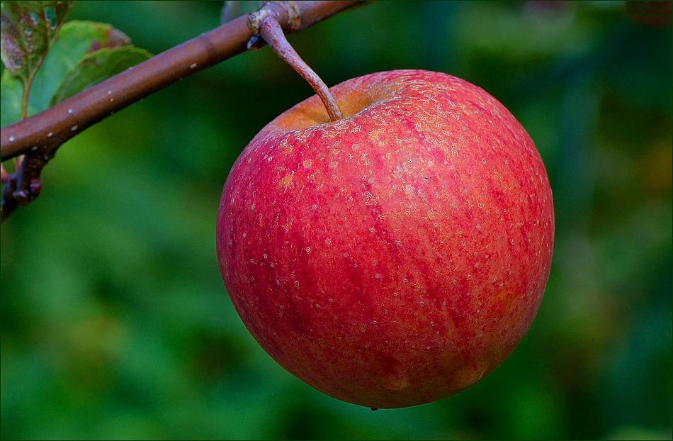 Heute schon eine Apfelpause ...,