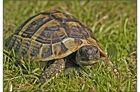 heute war mal wieder Schildkröten-Wetter :-)
