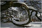 Hexenwald mit Schnee