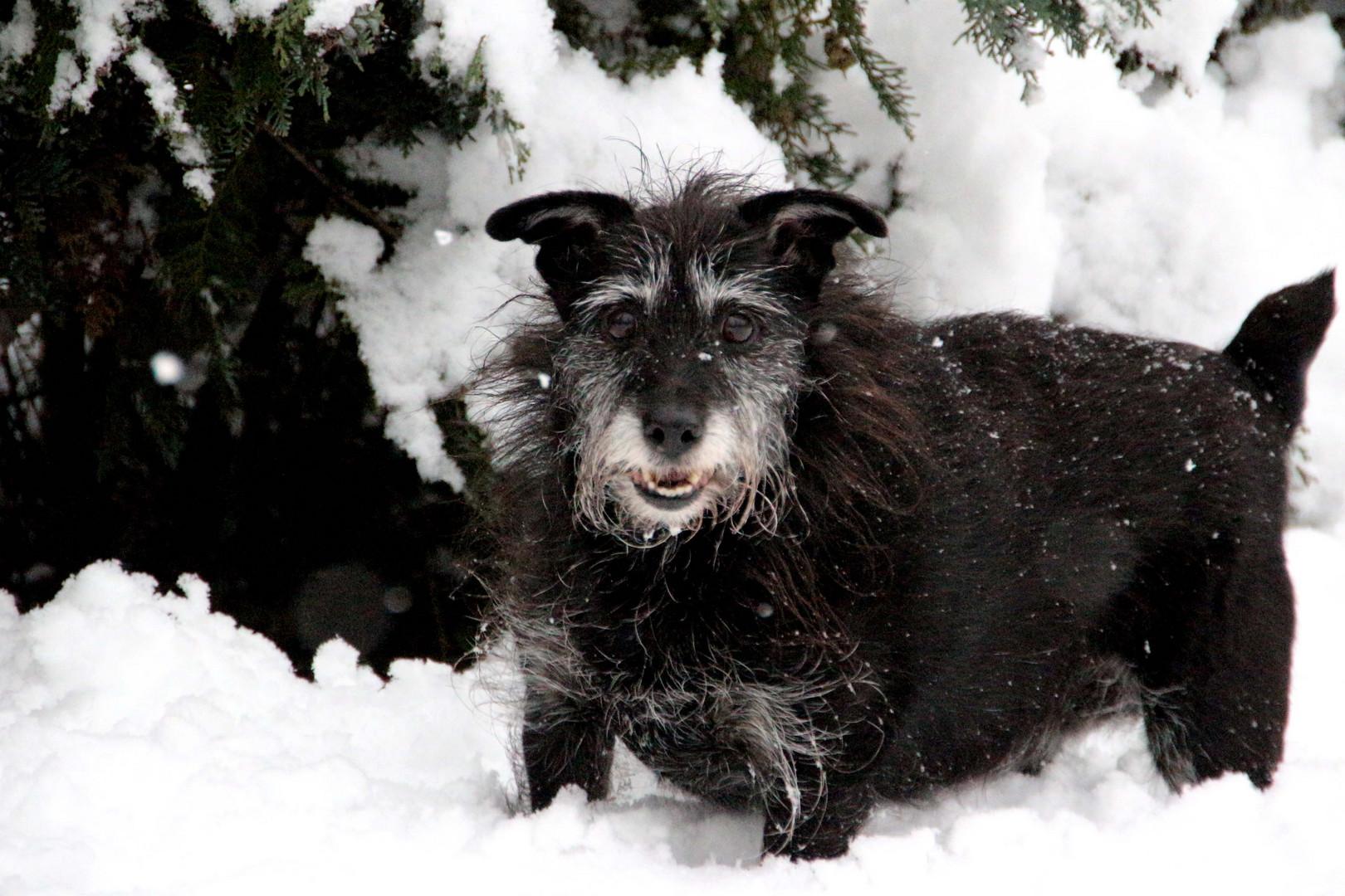 Hexli im Schnee