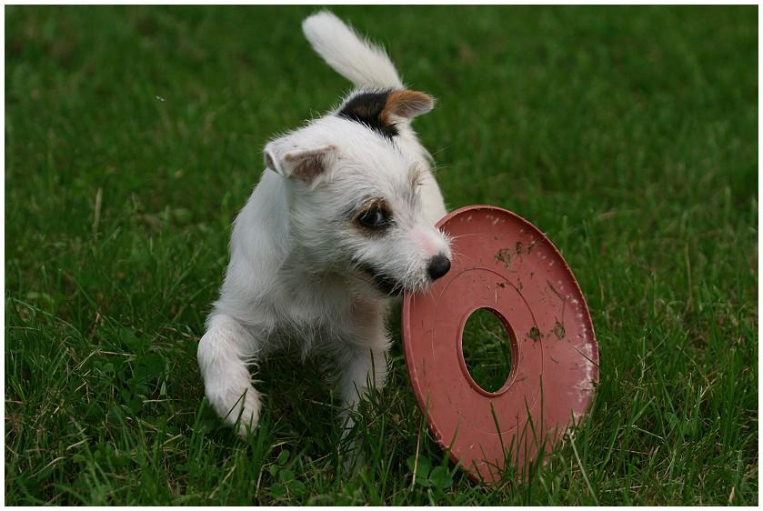Hey, das ist meine Frisbee...