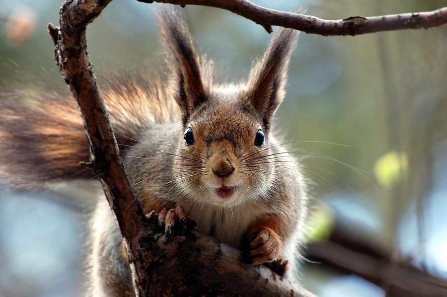 Hey, it is my branch!!!